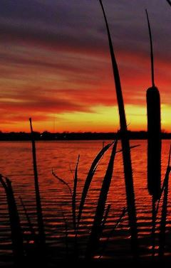 sunset_cattails.JPG